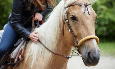 passeggiata a cavallo umbria galoppare umbria umbria percorsi con cavallo escursioni uniche sorprendimi umbria