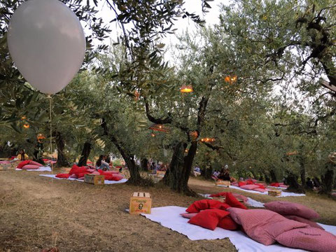 GOURMET PICNIC AMONG THE UMBRIAN OLIVE TREES