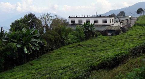 Teegarten Temi