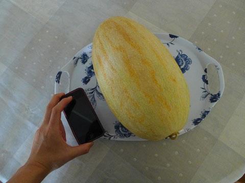 【ハミウリ(メロン)を携帯と比べると 大きさはこんな感じです。】