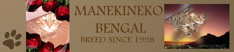 Bengal Breed since 1998, criadero de gato de raza bengal desde 1998, elevage de chats de race bengal depuis 1998.
