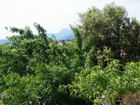En arrière plan le Mont Coudon