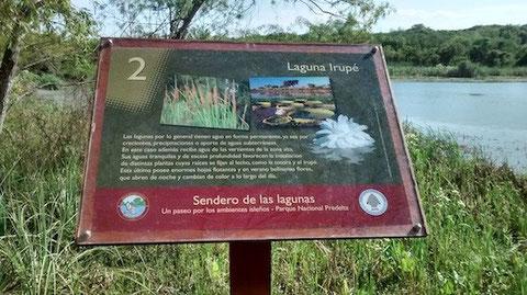 """Die Seerose """"Irupe"""" gibt es auch im Nationalpark zu bewundern - dies erklärt eine Infotafel."""