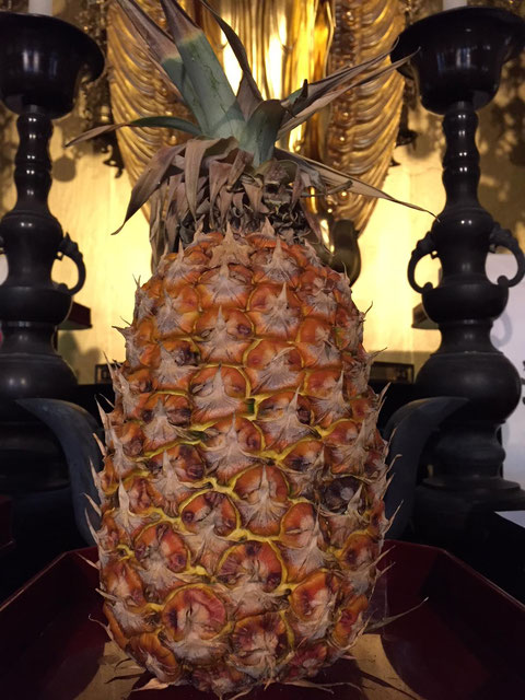 This pineapple as an offering to Buddha has been here for almost 4 weeks.   I think it's now ready to eat!!!