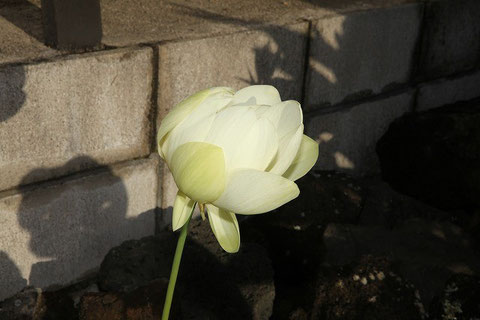 4th Day Flower at 7:48 a.m.