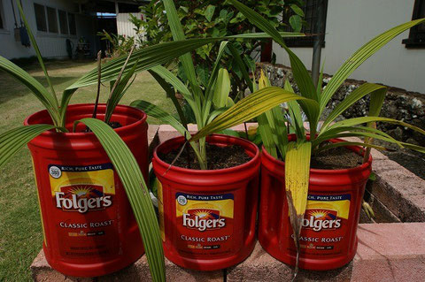 Planters reused by empty coffee containers.