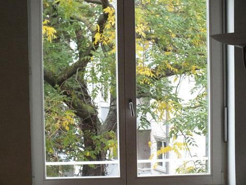 Blick aus dem Fenster (6)