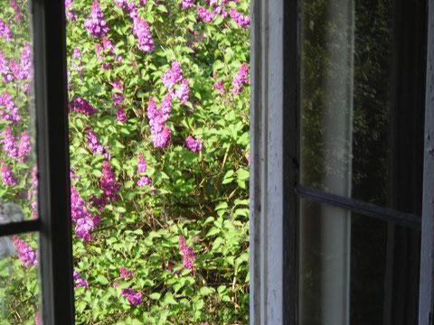Blick aus dem Fenster (3)