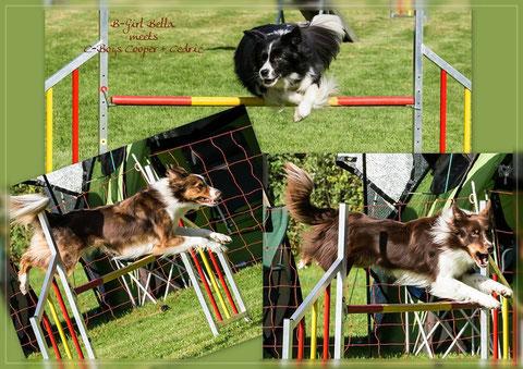 Collage von Steffi, Bella, Cooper und Cedric