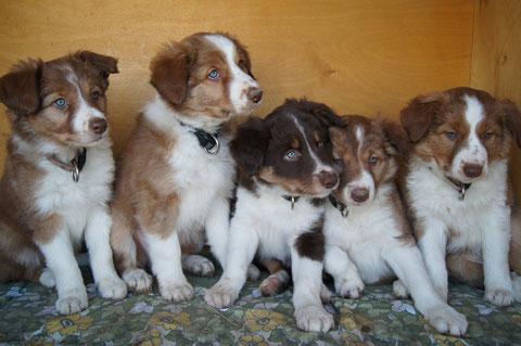 Cara, Cajus, Cedric, Caja und Cali