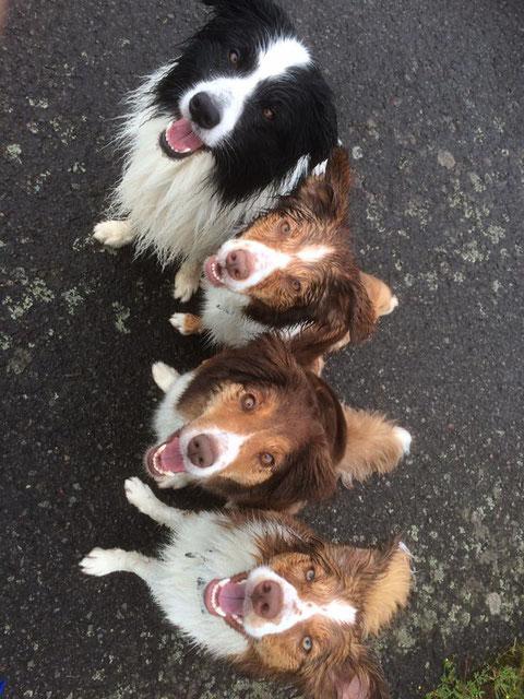 Bo, Alva, Ada und Cali