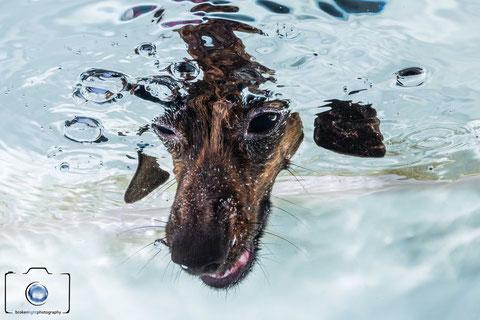 Bild: Hunde Unterwasserfoto Berlin