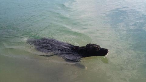 Faye der Turboschwimmer