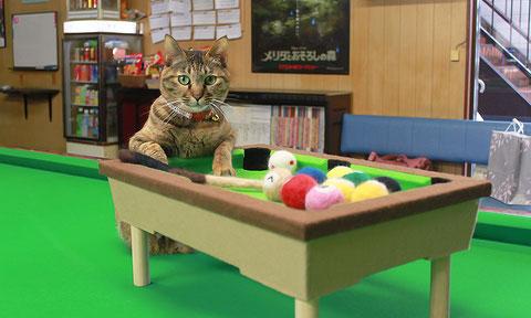 Nekomachi-san, one of the most popular cat in billiards hall in Shimane, Japan has passed away September 2020.  All photos taken by Hideki Otake.
