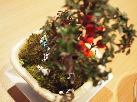 なんとも かわいい アートな盆栽^^ 嬉しいお土産です^^