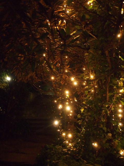 7時から8時の間点灯する中庭のイルミネーション^^だーさん、ケーキ喜ぶかなー@^^@