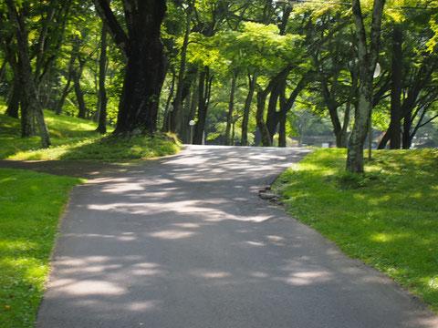 緑がきらきら 木漏れ日 ひらひら
