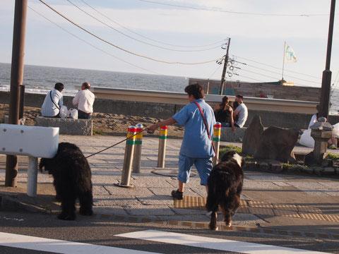 由比ヶ浜の海で不動産のお兄さんが下してくれました。おっきい犬のさんぽ