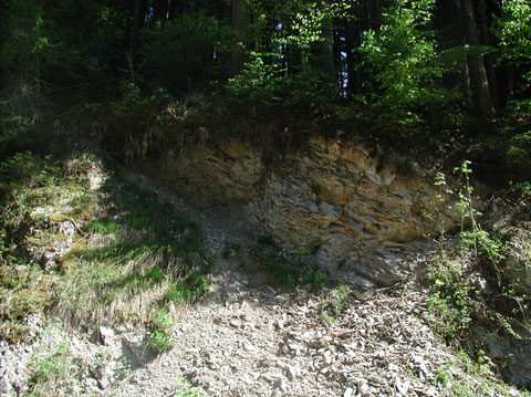 """Bad Häring, unweit der """"Europabrücke"""": Aufschluß im """"Unteren Zementmergel"""" mit diverser Gastropoden- und Bivalvenfauna, unter Anderem mit Propeamussium sp. (Photo Heyng, Mai 2007)"""