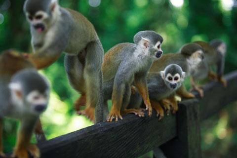 Touren ab Leticia im kolumbianischen Regenwald