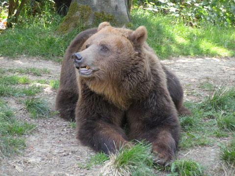 Anholter Bärenpark