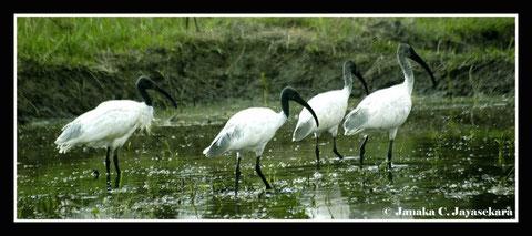 Natur Sri Lanka