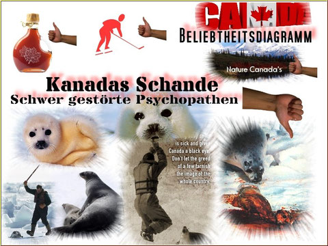Robbenschlachten in Kanada