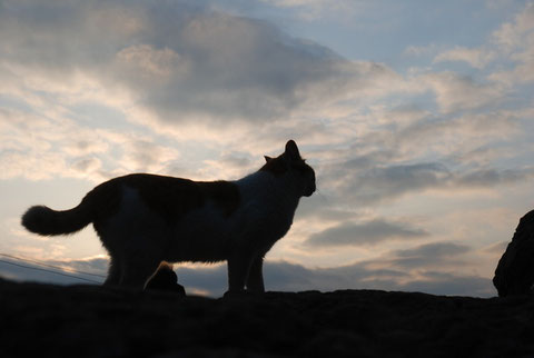 夕暮れ時の迷い猫