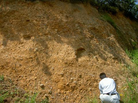 五色浜背後の大阪層群の浸食崖 レキが多く混入