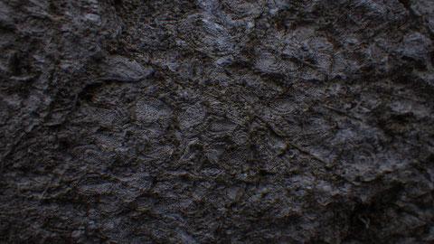 分かりにくいですが、指紋のような模様がフズリナの化石です