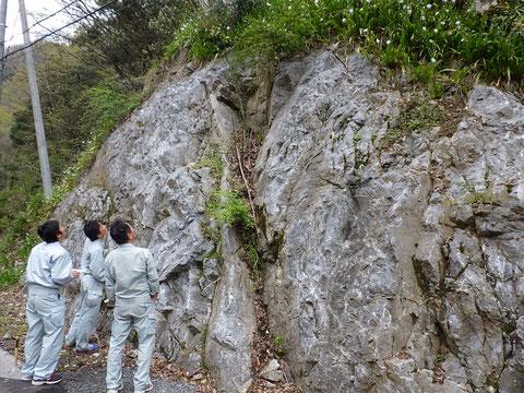 県道17号わきの石灰岩の露頭