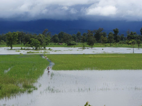 Picture 40: Submerged rice fields in Pakkading district, Boulikhamxay province, Lao PDR