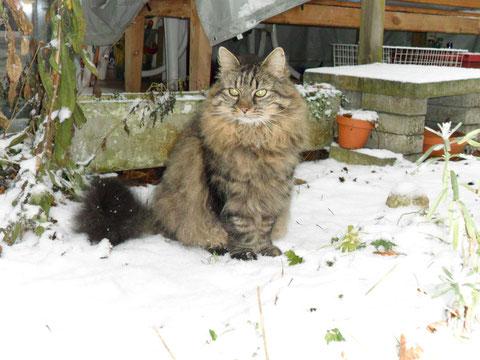 Snorri im ersten Schnee des Winters