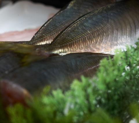 毎朝、新鮮な地元勝浦漁港から地魚介を仕入れています。 勝浦漁港の江戸前寿司店 鮨成田家