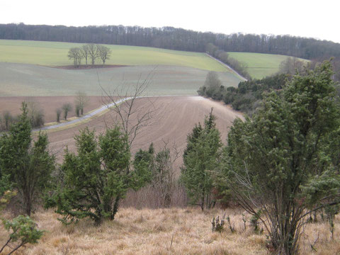 coteaux calcaires, pelouses calcicoles du larris de Bouchon