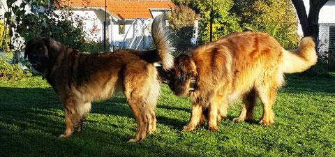 Daisy und Hannes