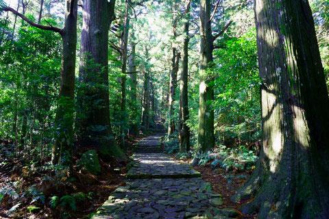 熊野古道もロンリープラネット