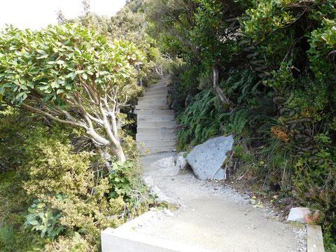 セアリーターンズ階段