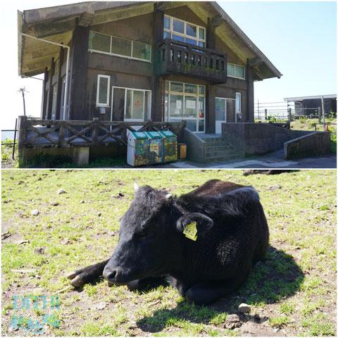ふれあい牧場では間近に牛さん