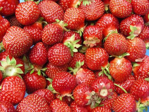 7 kg Erdbeeren 04.06.2011