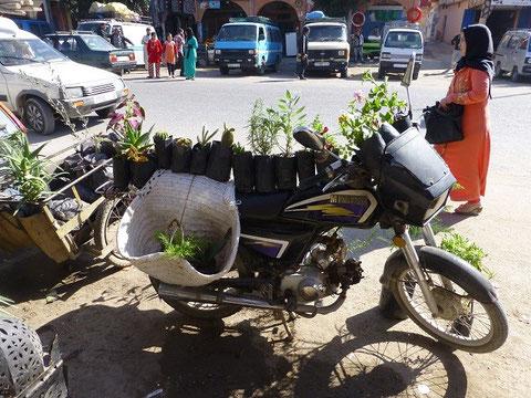 so sieht der kleine Bruder hier an der Sraße als Blumenverkaufs- Moped aus