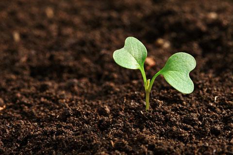 新型コロナウイルス禍 農業と異業種の繋がり 日本の未来のために