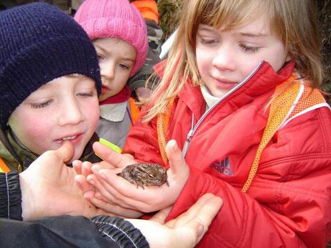 Wir entdecken die Natur: eine Erdkröte