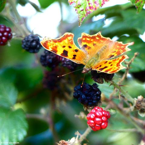 Kitsch, paradise, artisan, créateur, art, nature, papillon, photographie