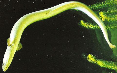 Trattamento di semi di cumino di parassiti