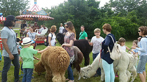 Kamelfest 2016 Schloss Hof - Alpaka Parkour und chilliger Weidegang