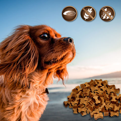 snacks and treats for dogs, sugarfree