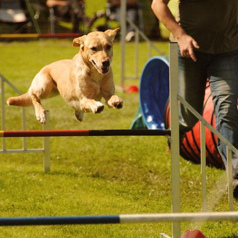 Hundesnacks, Leckerlis zum Trainimng und Ausbildung, zuckerfrei