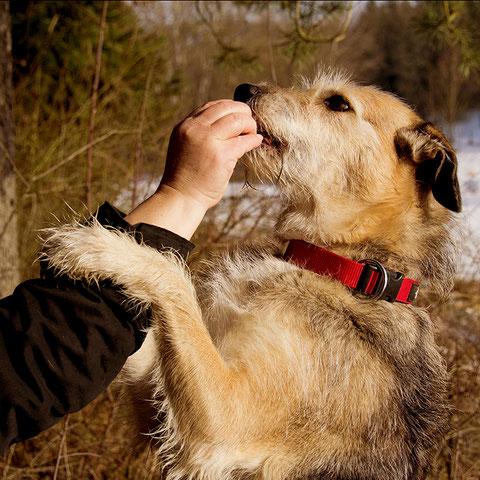 Hundesnacks, Leckerlis für Hunde, zuckerfrei