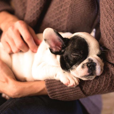 Hundesnacks, Leckerlis, Kausnacks, Zahnreinigung für Hunde